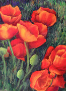 Flamin' Poppies